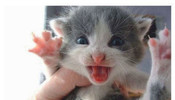 【太可爱了】超萌猫咪组图