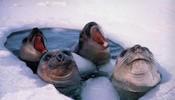 在北极游泳就是爽啊