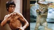 李小龙转世的猫