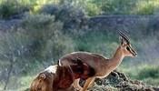 看到这一幕猎人哭了