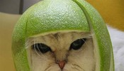 可爱的柚子MM