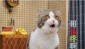 """可爱的猫咪""""哥蛋疼啊。。。。。"""""""
