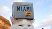 好汉堡包,我当然要顶