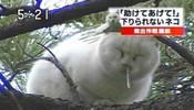 问:见过猫咪流鼻涕吗?答:还真没见过!