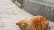 上街乞讨的猫,真可怜~!