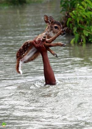 从洪水中救起小鹿的少年,这一幕好暖啊~真心有点帅啊,又善良,好boy~