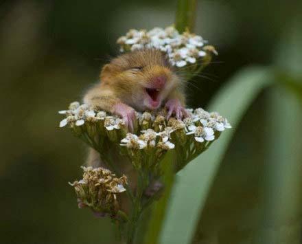 笑得好灿烂,就像花儿一样