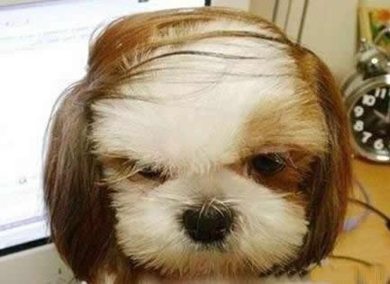 看发型就知道是厅级干部