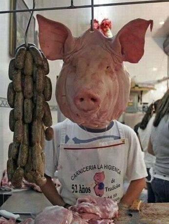 老板的猪头