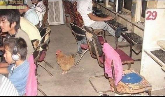 这网吧服务真好,还配备鸡!