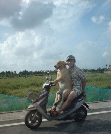 狗狗带我去兜风