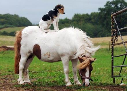 骑白马的不一定是王子,也有可能是。。