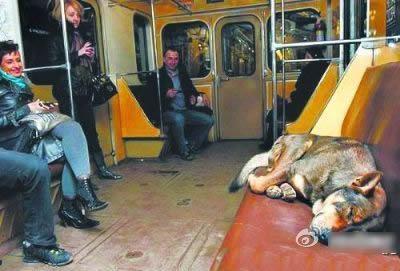 会坐地铁的狗