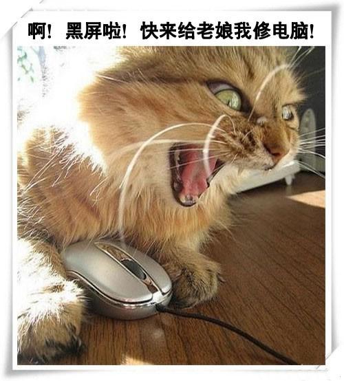 爆笑猫咪家族修电脑