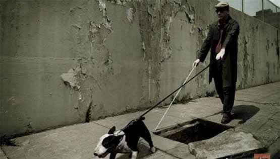 这狗也太不敬业了吧