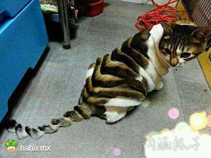 这猫 …… 非主流了