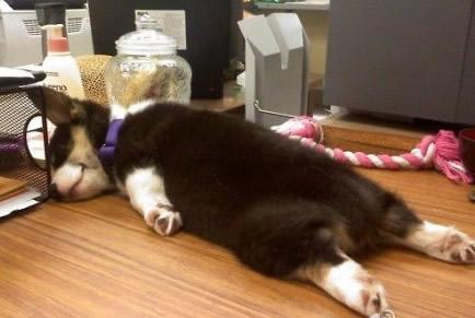 第一次见狗这种睡姿