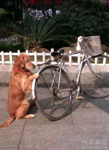 帮主人看车的狗狗挺有模有样的