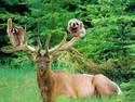 动物和谐的最高境界啊
