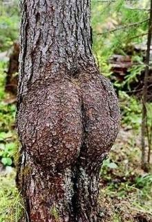 """百年""""股""""树"""
