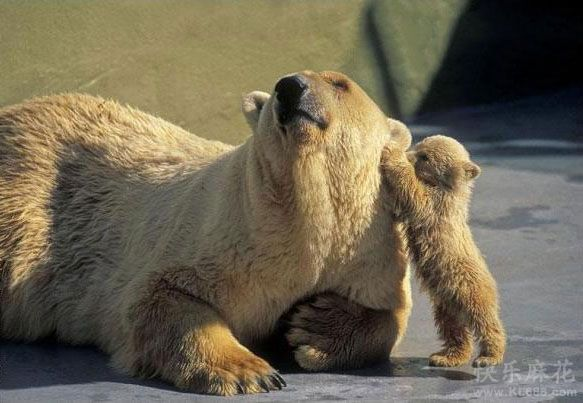 妈妈,偶来给你掏耳朵