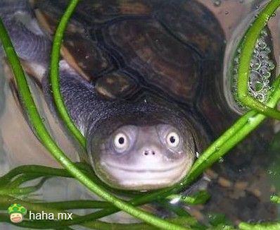 好萌的乌龟。。。