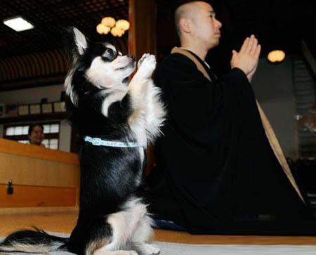 狗狗也念阿弥陀佛了