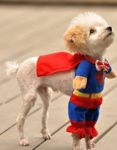 又见超人狗