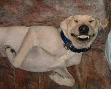 狗狗也疯狂