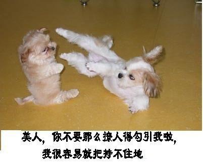 搞笑动物集锦