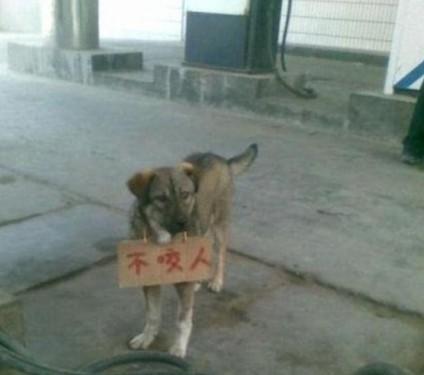 这狗不咬人的