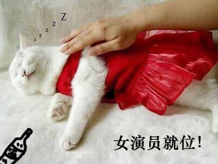 猫王子霸王硬上弓