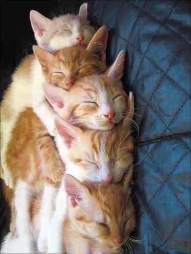 有叠罗汉,也有叠猫猫