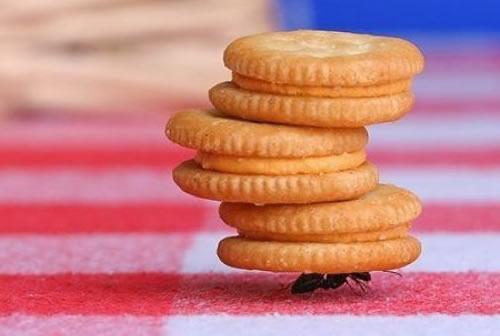 蚂蚁的力量