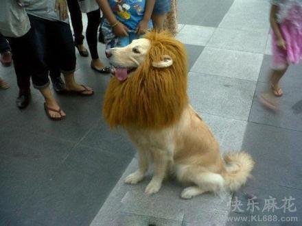 狗狗,你这身打扮太坏了