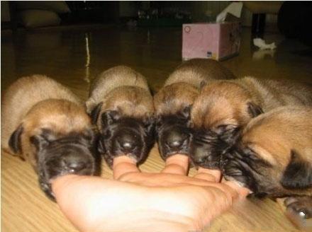 小狗们饿慌了