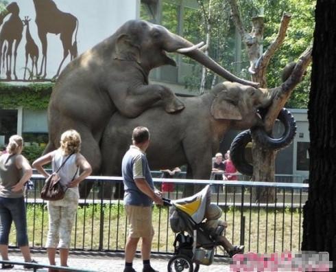 大象 也疯狂