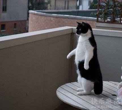 哥不是企鹅,好不容易从箱底儿找出这么一件燕尾服。