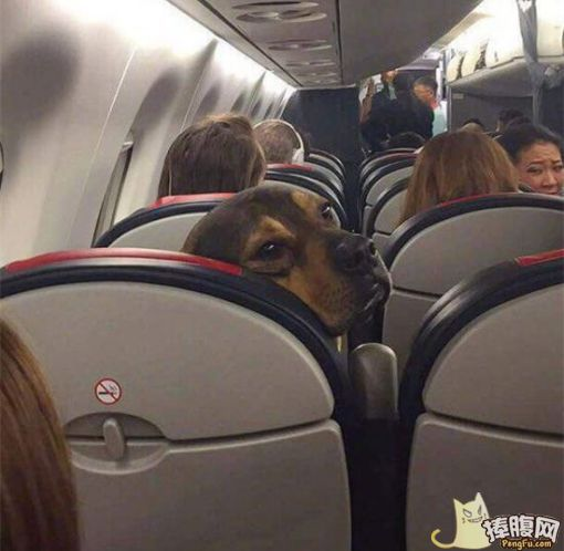 能让您孩子别老踢我座位吗
