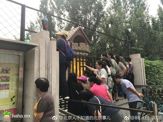 北京某幼儿园今儿开学第一天,这是园外的家长们