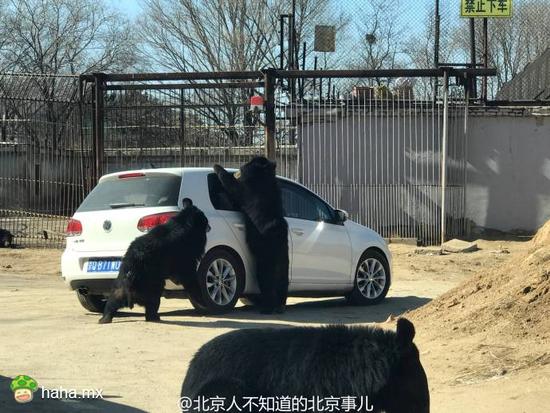 希望人能懂点事,熊没事就行!