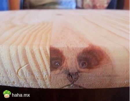救命,我被桌子封印住了
