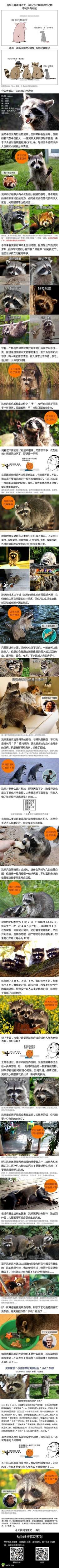 动物解说系列--浣熊