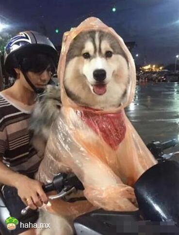 喜欢你的雨衣吗